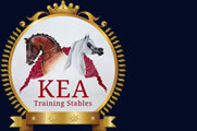 Riding Lessons, Dressage, Show Horses & Horse Training